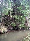 речка Колочь. Автор:  М.С., 06.11.2008